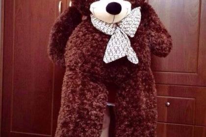 Các mẫu gấu bông Teddy 1m6 dễ thương với giá cả hấp dẫn