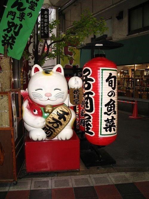 Chú mèo thần tài Siêu to khổng lồ đặt trước cửa tiệm một quán ăn Nhật Bản