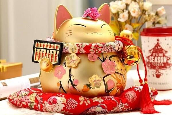 Giữa bụng của mèo sẽ là những bông hoa đang thi nhau đua nở