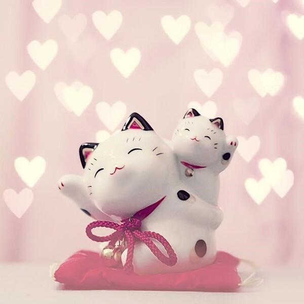 Hình ảnh mèo thần tài đáng yêu cho hội chị em phụ nữ