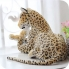 bao-dom-nhoi-bong-leopard-2