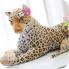 bao-dom-nhoi-bong-leopard-494x500