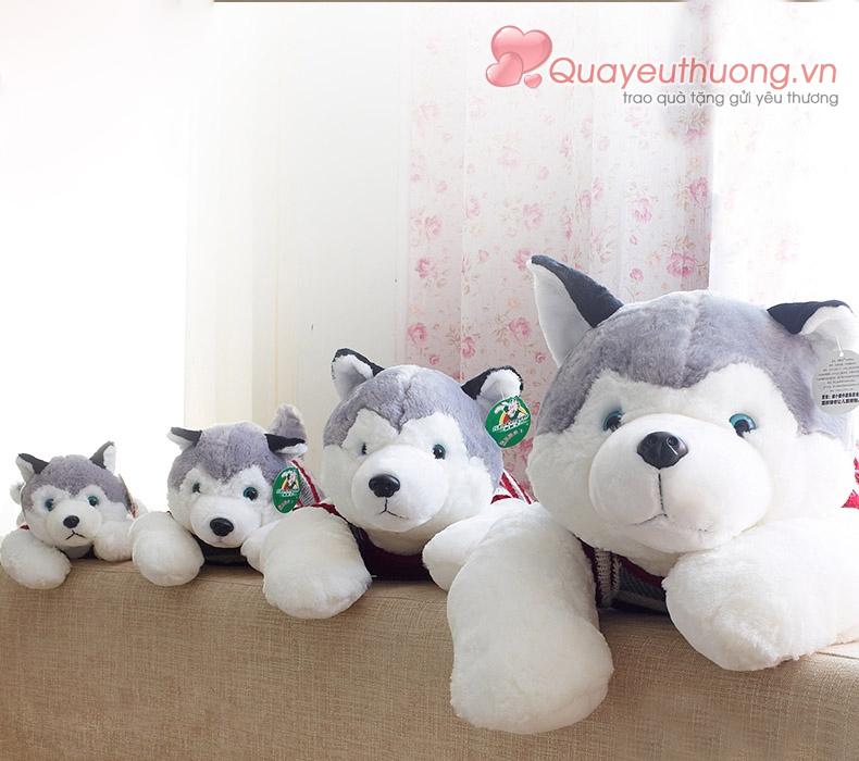 cho-bong-husky-5